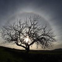 Ben nezaketi ağaçtan öğ...