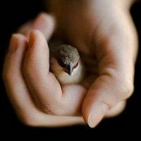 Merhamet masum olduğu ...