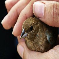 Biz hep yaralı kuşları ...