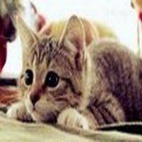 Dün Bir Kediye Sırf S...