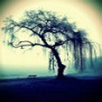 Mutluluk ağacına tır...