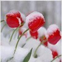 Kar taneleri ne güzel ...