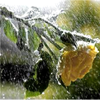 sesini değil, sözünü yükseltmeli insan. çünkü gök gürültüleri değil, yağmurlardır yaprakları yaşatan.