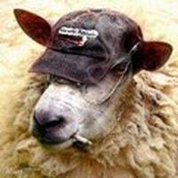 Koyun: Sürüden ayrı gez...