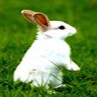 Tavşan olmak da zor. Hi...