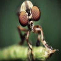 Yılın ilk sivrisineğ...