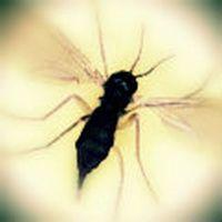 Az önce odama 4 sivris...