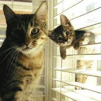 Dışarıda yalnız kedi gö...