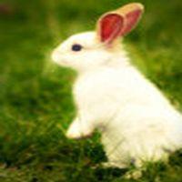 Tavşan zıplıyor 8 y�...