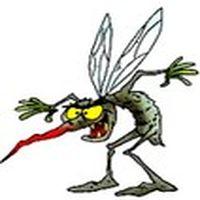 Hoşlandığım sivrisineği...