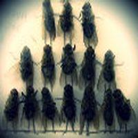 Bu sinekler anlamamakta...