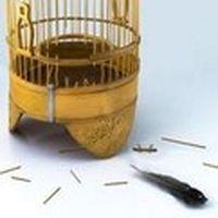 Altın kafesi bülbüle so...