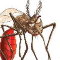 sivrisinekleri anlamıyorum. direk gel, sok ve git. kulağıma gelip de nasıl soktum ama, hahah şeklinde vızıldama nedir.
