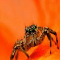 Elin örümceği normal...