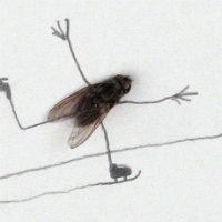 Odamda bir sinek var, s...