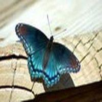 Kelebekler bir gün yaşa...