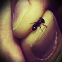 Küçükken, karınca y...