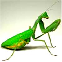 Evde böcek görmek sor...
