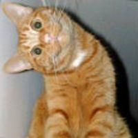 1 liral�k sucuk ald�m kediye v...